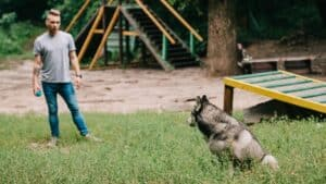4 Clever Training Tips For Siberian Huskies