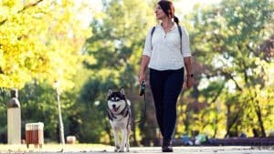 10 Signs When Husky Wants to Go For A Walk