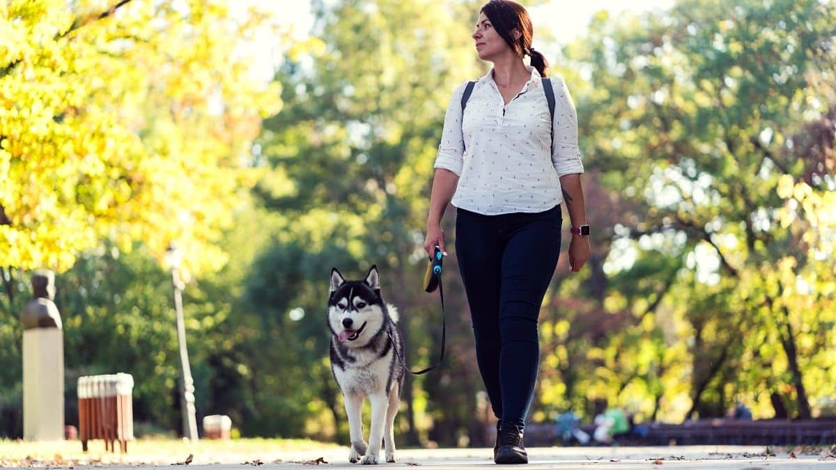 Ten Signs When Husky Wants to Go For A Walk