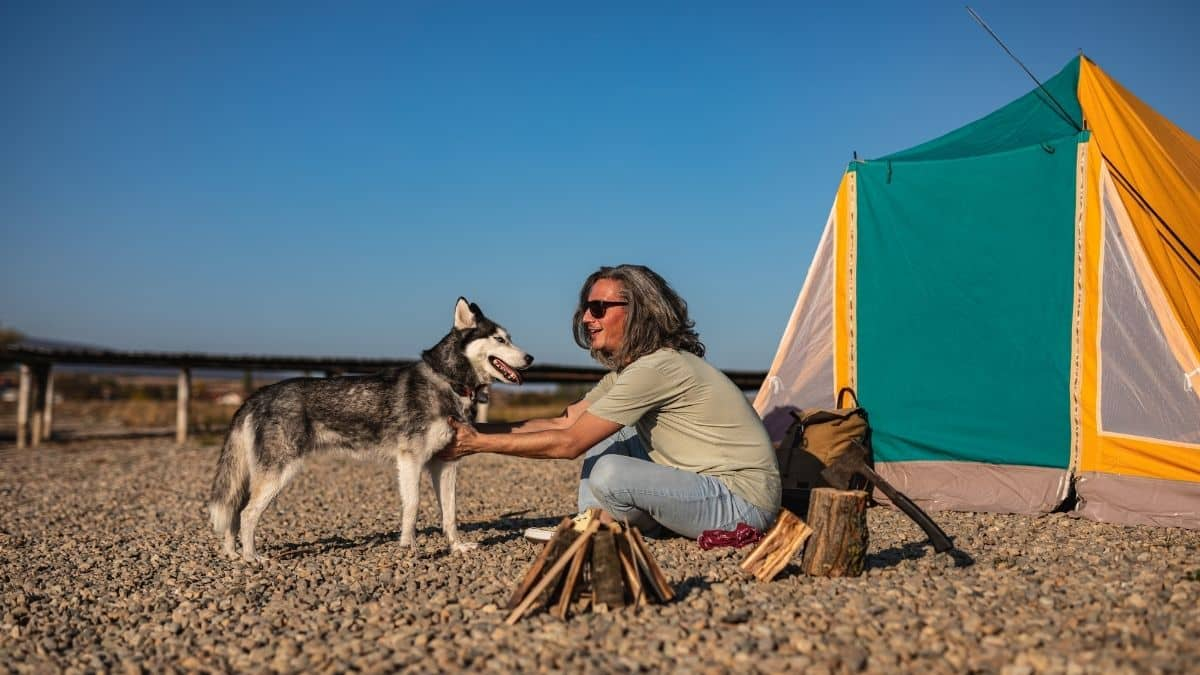 Are Huskies Good Camping Dogs