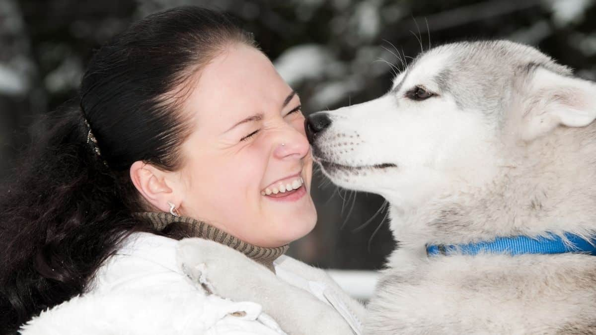 Are Huskies Good For First-Time Owners