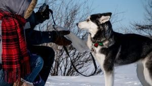 5 Best Training Collars for Huskies (Buying Guide & updated 2021)