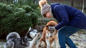 10 Best Treats For Huskies (Buying Guide & Reviews)