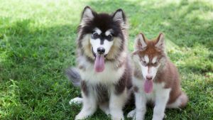 Creative Husky Names And Their Meanings